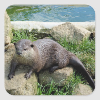 Thoughtful otter square sticker
