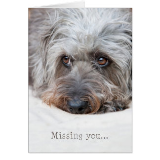 Thoughtful Scruffy Pup - Missing You Greeting Card