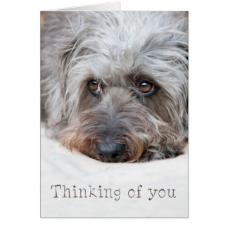 Thoughtful Scruffy Pup - Thinking of you Greeting Cards