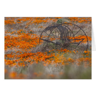 Thrasher in Field of Poppies Card