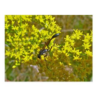 Thread-Waist Wasp on Goldenrod Items Postcard