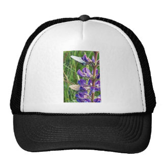 threatened endangered species and fire cap