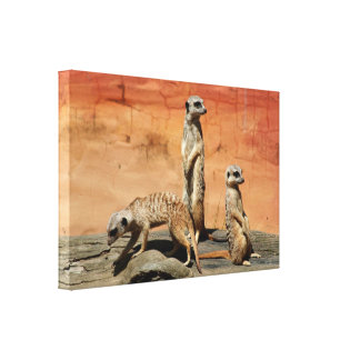 Three African meerkats at the zoo Canvas Print