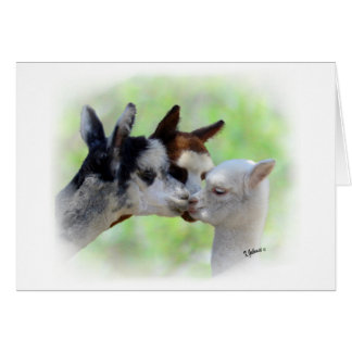 Three Alpacas Card