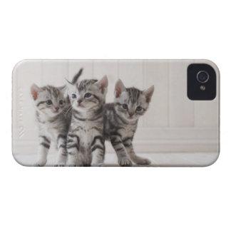 Three American Shorthair Kittens Case-Mate iPhone 4 Case