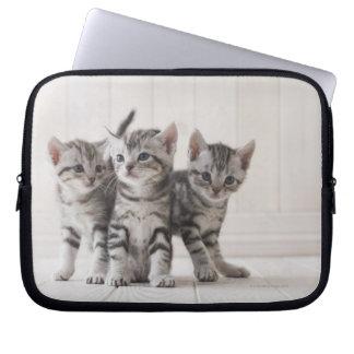 Three American Shorthair Kittens Computer Sleeves