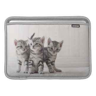 Three American Shorthair Kittens MacBook Sleeve