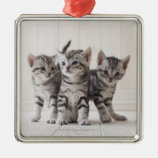 Three American Shorthair Kittens Silver-Colored Square Decoration
