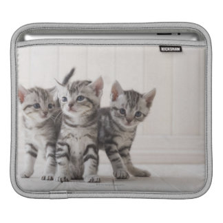 Three American Shorthair Kittens Sleeves For iPads