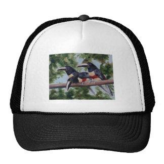 Three Amigo s Toucan Hat