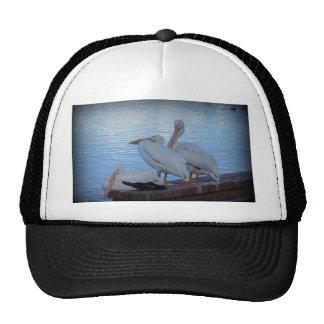 Three Amigos Mesh Hat