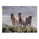 Three Amigos Post Card