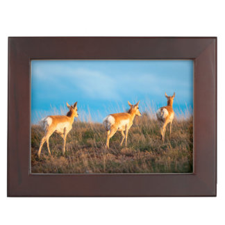 Three antelope walking away at sunset keepsake box