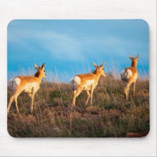 Three antelope walking away at sunset mouse mat