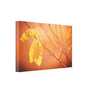Three autumn leaves canvas print