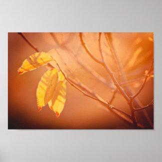 Three autumn leaves poster