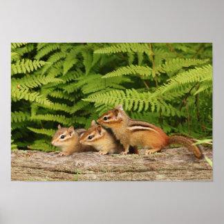 three baby chipmunks poster