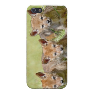 Three Baby Coyotes Posing iPhone 5/5S Covers