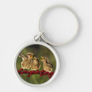 Three Baby Lanius Schach Birds Silver-Colored Round Key Ring