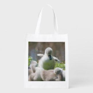 Three Baby Swan Cygnet ducklings cuddling together