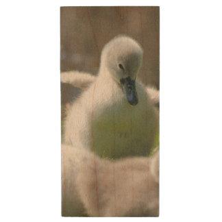 Three Baby Swan Cygnet ducklings cuddling together Wood USB 2.0 Flash Drive