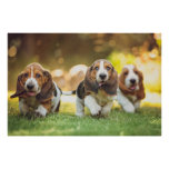 Three Basset Hound Puppies Joyfully Running Poster