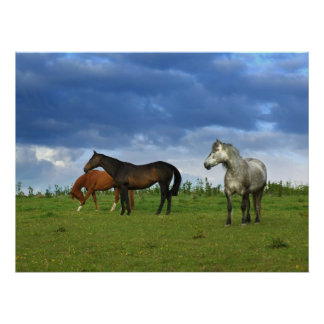 Three beautiful horses on sunny Summer day poster