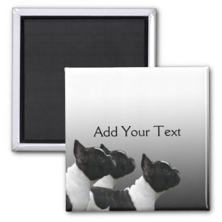 Three Black and White French Bulldogs Magnet