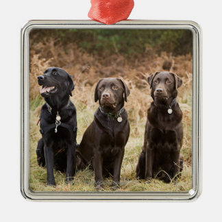 Three Black Labrador retrievers Christmas Ornament