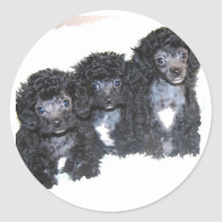 Three black silver Poodle puppies Round Sticker