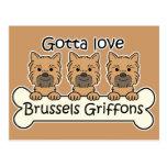 Three Brussels Griffons Postcard
