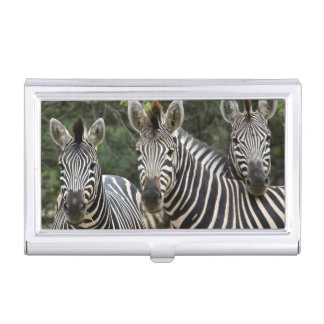 Three Burchell's Zebra (Equus Burchellii) Stand Business Card Holder