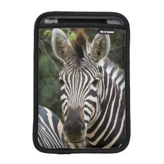 Three Burchell's Zebra (Equus Burchellii) Stand iPad Mini Sleeve