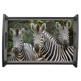Three Burchell's Zebra (Equus Burchellii) Stand Serving Tray
