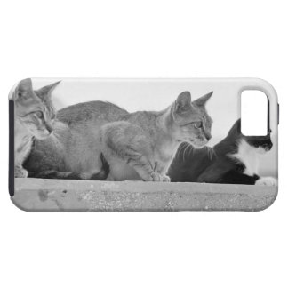 Three cats iPhone 5 cover