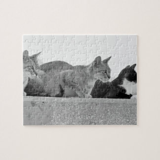 Three cats jigsaw puzzle
