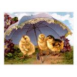 Three Charming Easter Chicks Postcard
