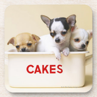 Three chihuahua puppies in cake tin coaster