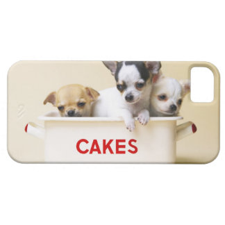 Three chihuahua puppies in cake tin iPhone 5 cover