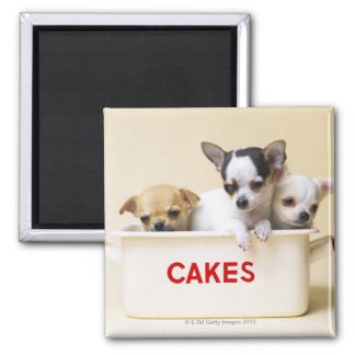Three chihuahua puppies in cake tin refrigerator magnets