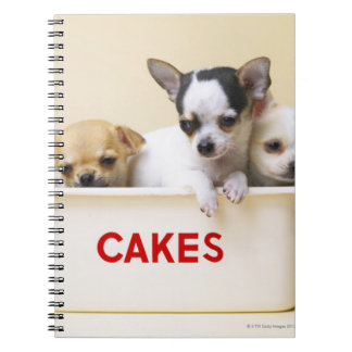 Three chihuahua puppies in cake tin spiral notebook