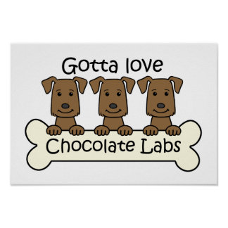 Three Chocolate Labs Poster