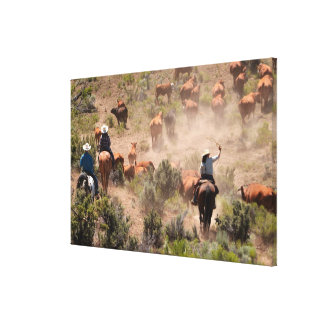 Three cowboys and cowgirls driving cattle canvas print