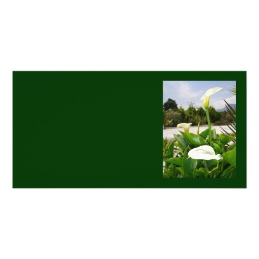 Three Cream Calla Lilies With Garden Background Picture Card