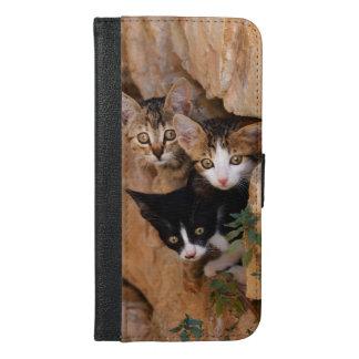 Three curious cat kittens