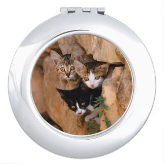 Three cute curious kittens compact mirrors