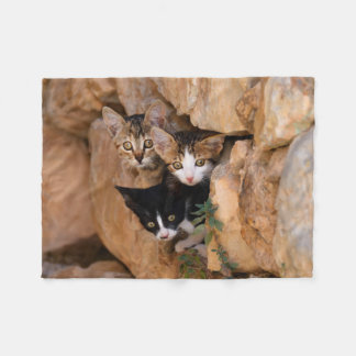 Three cute curious kittens fleece blanket