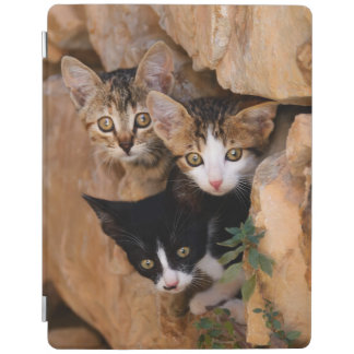 Three cute curious kittens iPad cover