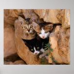 Three cute curious kittens poster