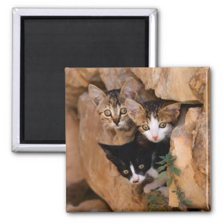 Three cute curious kittens square magnet